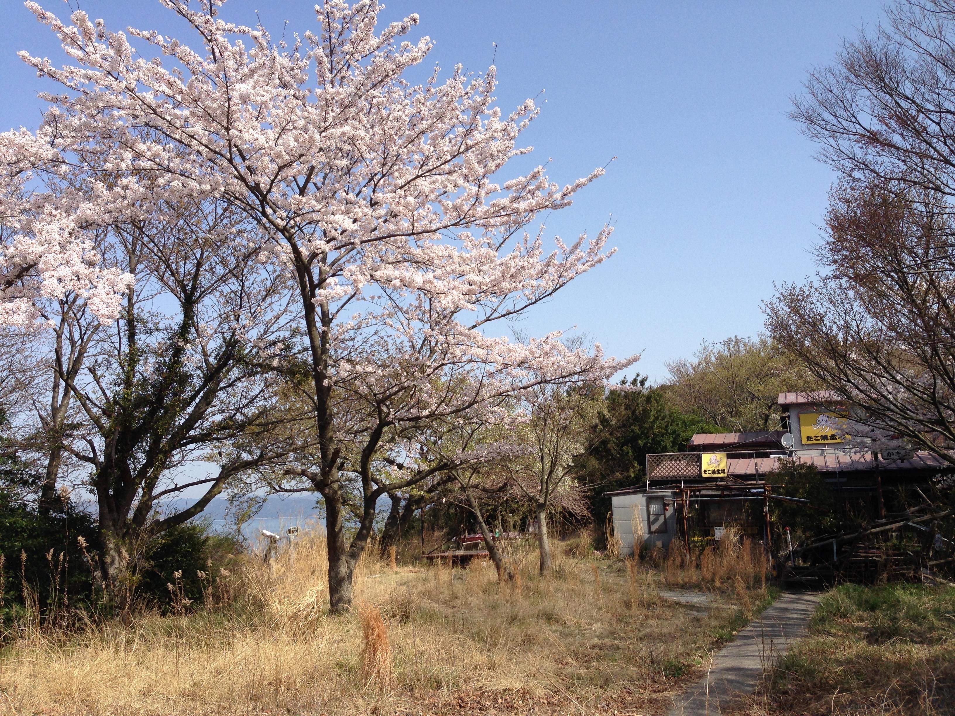 http://kozaisoft.com/blog/2018/03/31/IMG_2894.jpg